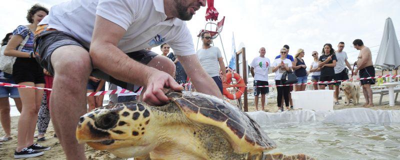Lo storytelling del rilascio della tartaruga Michi